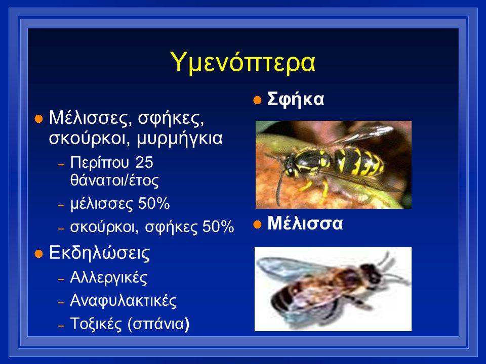Υμενόπτερα Σφήκα Μέλισσες, σφήκες, σκούρκοι, μυρμήγκια Μέλισσα