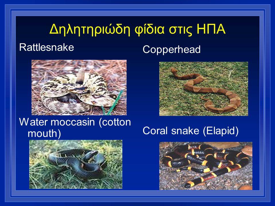 Δηλητηριώδη φίδια στις ΗΠΑ