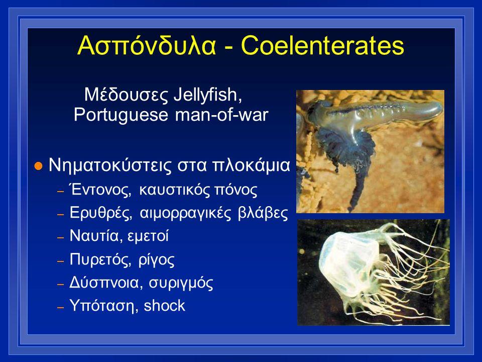 Ασπόνδυλα - Coelenterates