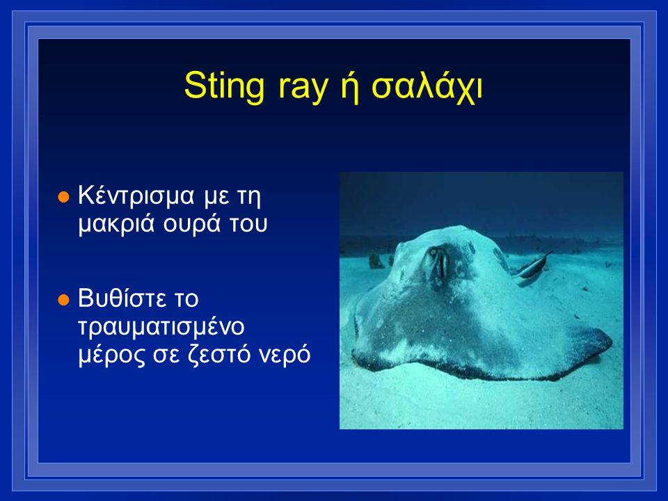 Sting ray ή σαλάχι Κέντρισμα με τη μακριά ουρά του