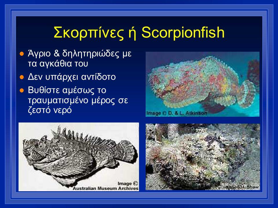 Σκορπίνες ή Scorpionfish