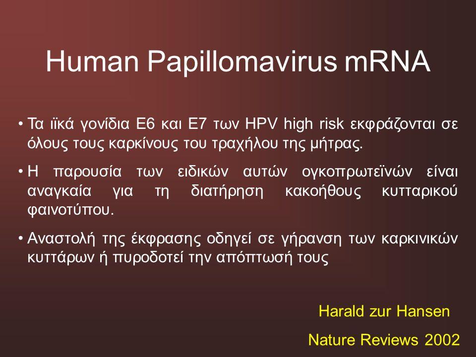 Human Papillomavirus mRNA
