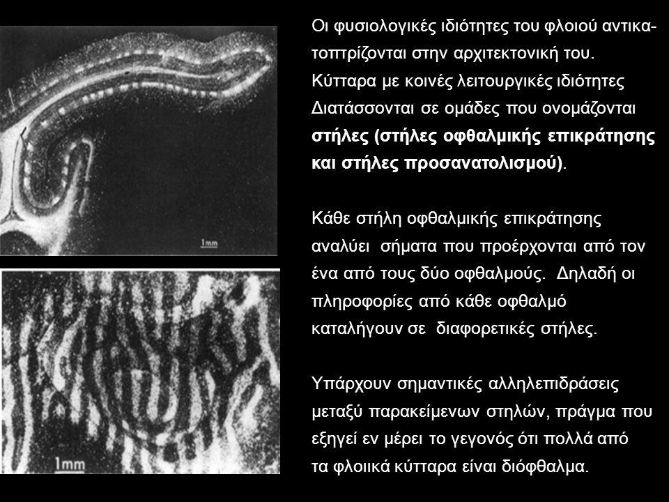 Οι φυσιολογικές ιδιότητες του φλοιού αντικα-