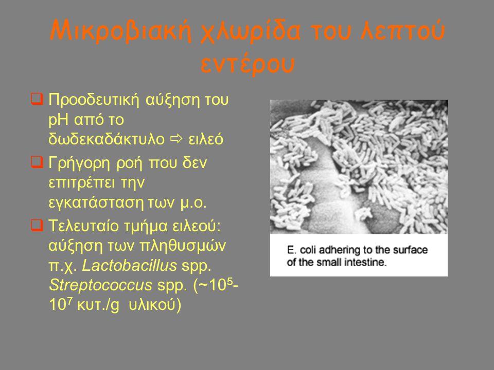 Μικροβιακή χλωρίδα του λεπτού εντέρου