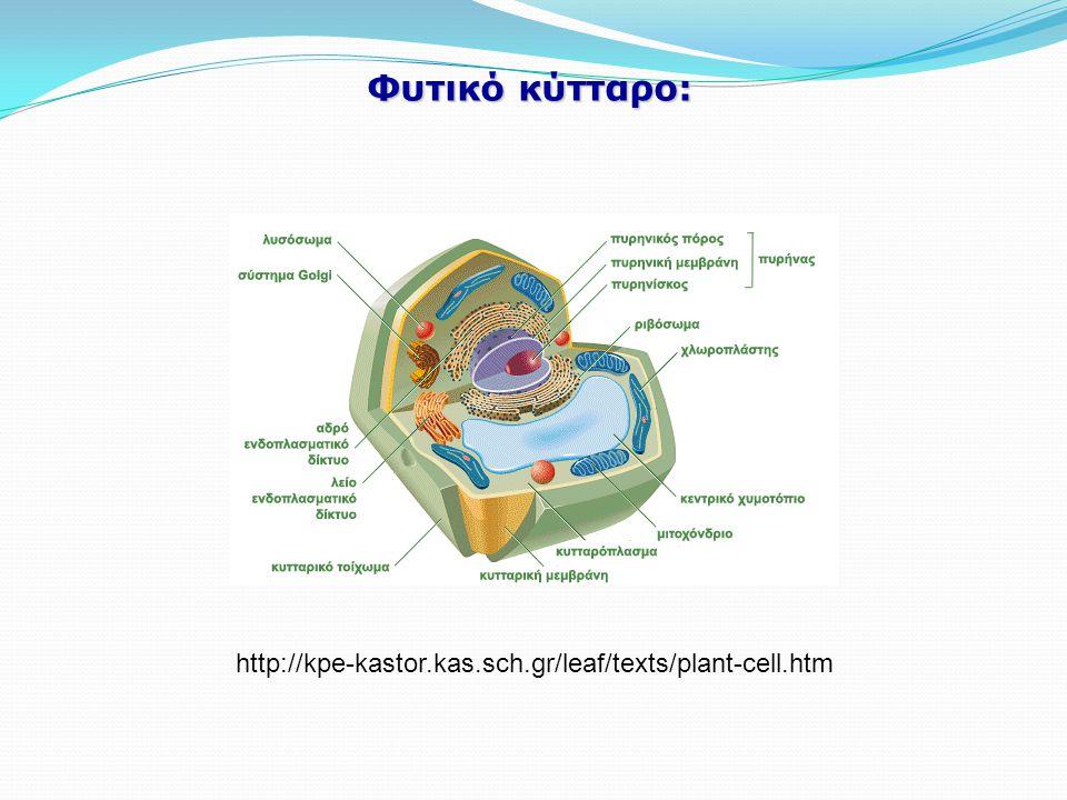Φυτικό κύτταρο: http://kpe-kastor.kas.sch.gr/leaf/texts/plant-cell.htm