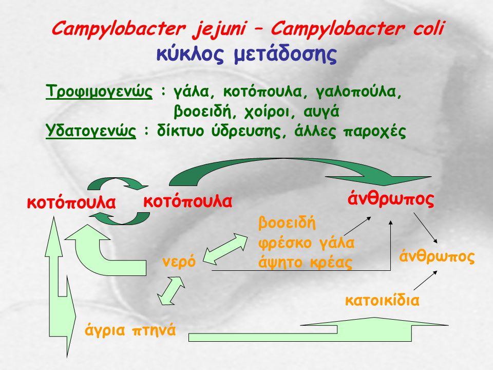 Campylobacter jejuni – Campylobacter coli