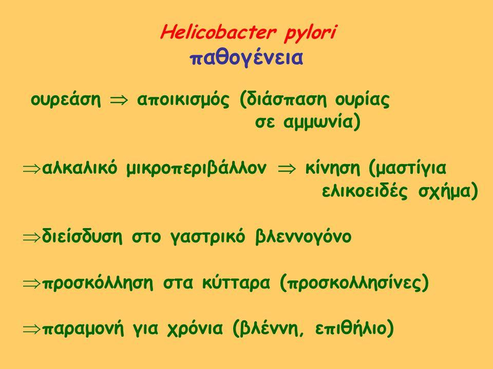 παθογένεια Helicobacter pylori ουρεάση  αποικισμός (διάσπαση ουρίας