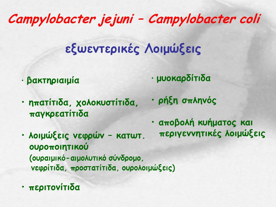 Campylobacter jejuni – Campylobacter coli εξωεντερικές Λοιμώξεις