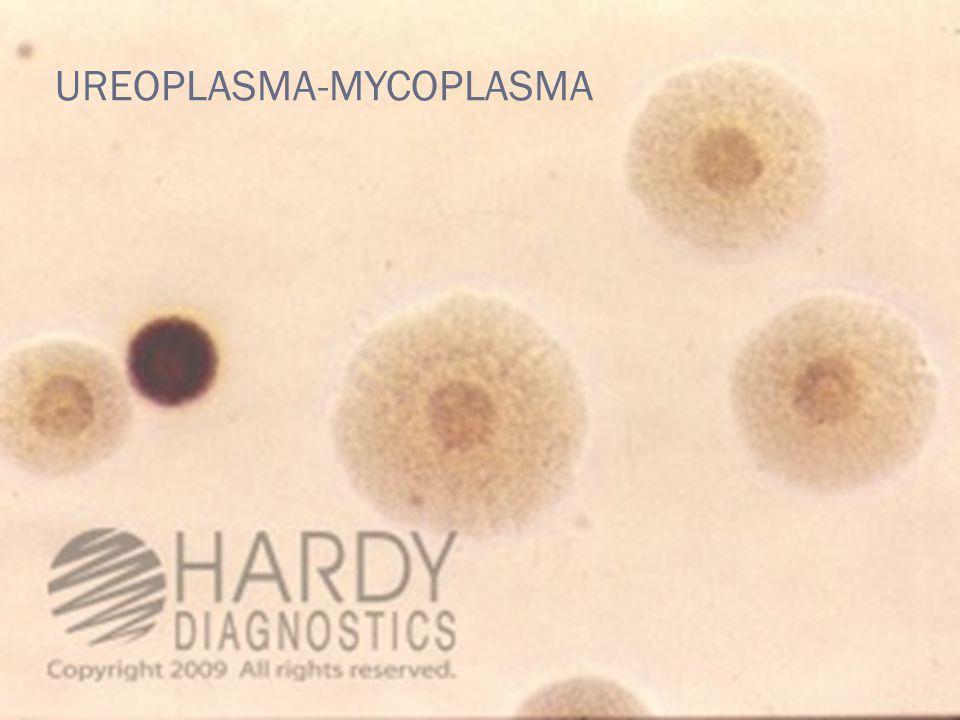 UREOPLASMA-MYCOPLASMA