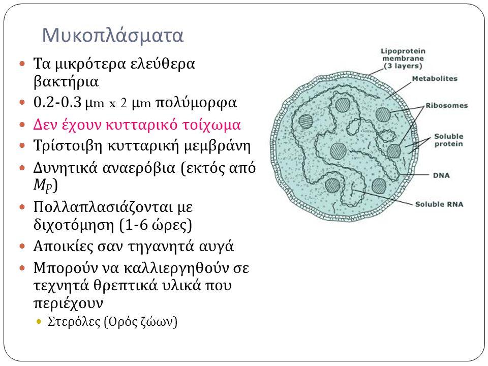 Μυκοπλάσματα Τα μικρότερα ελεύθερα βακτήρια