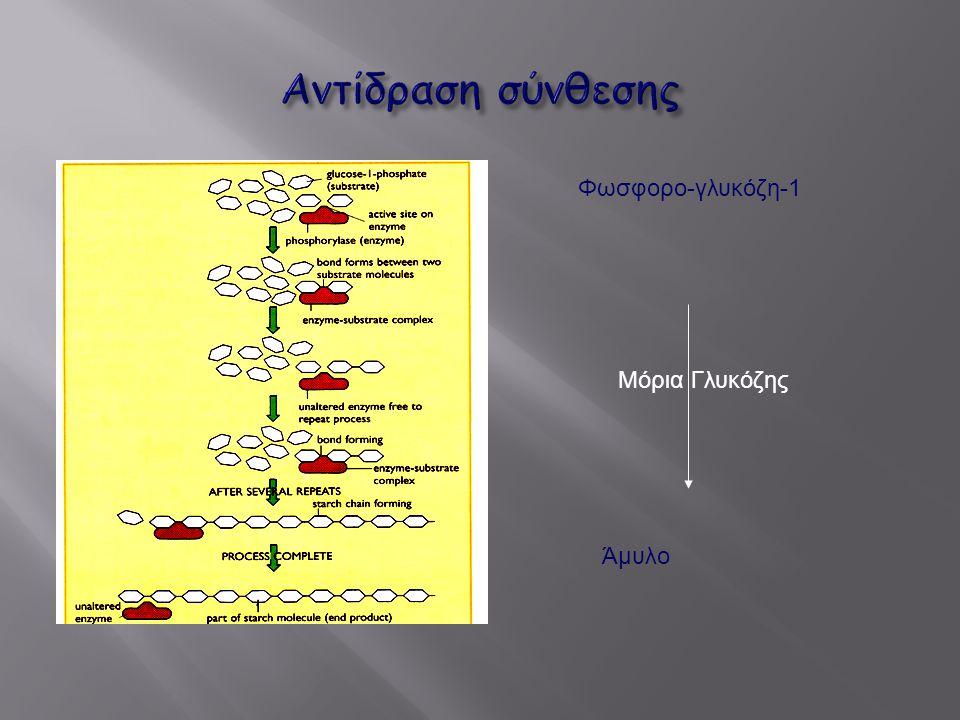 Αντίδραση σύνθεσης Φωσφορο-γλυκόζη-1 Μόρια Γλυκόζης Άμυλο
