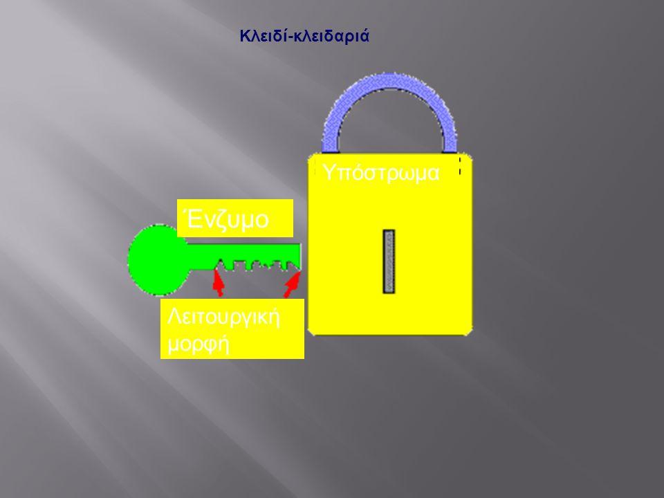 Κλειδί-κλειδαριά Υπόστρωμα Ένζυμο Λειτουργική μορφή