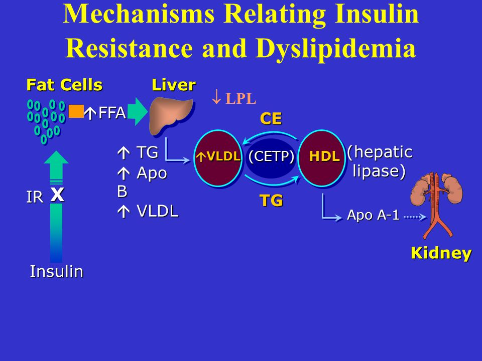 Mechanisms Relating Insulin Resistance and Dyslipidemia