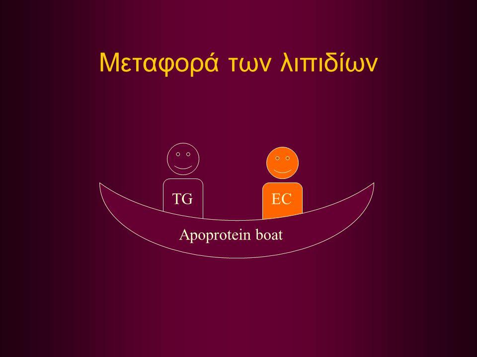 Μεταφορά των λιπιδίων TG EC Apoprotein boat
