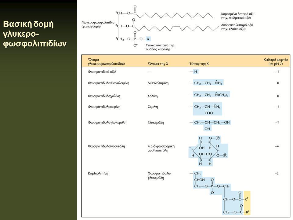 Βασική δομή γλυκερο-φωσφολιπιδίων