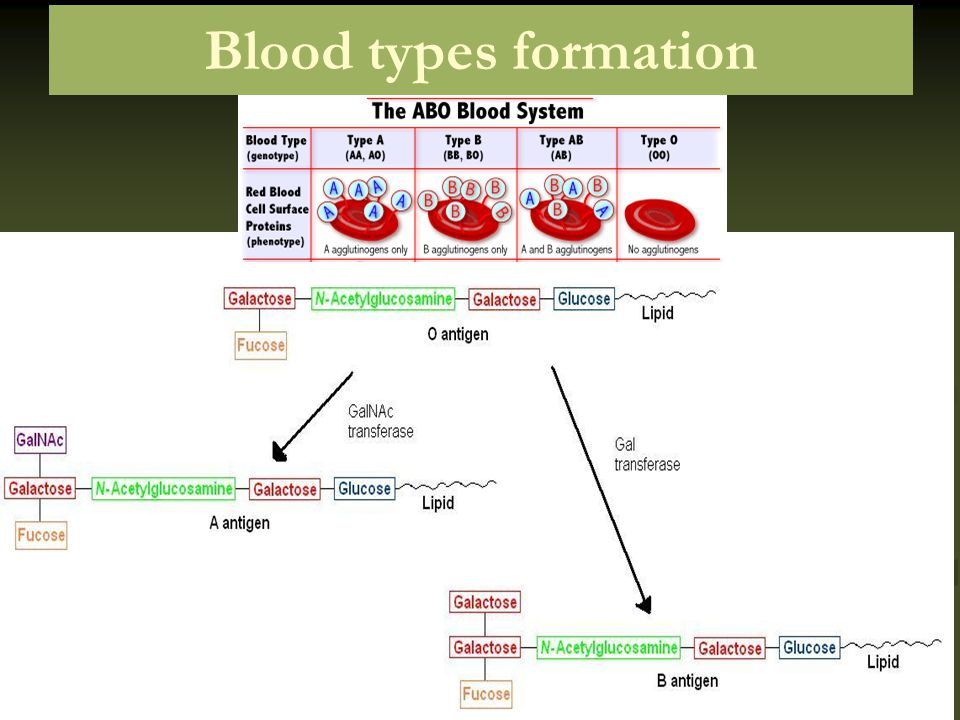 Blood types formation