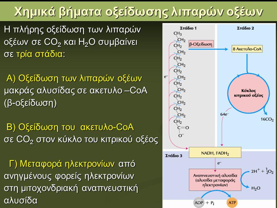 Χημικά βήματα οξείδωσης λιπαρών οξέων