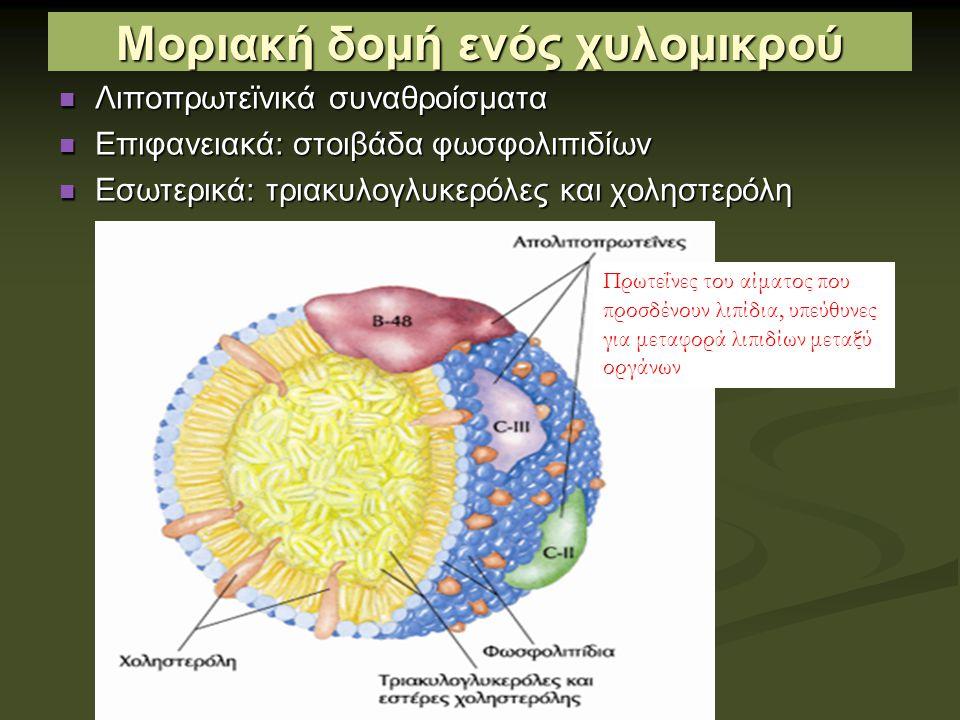 Μοριακή δομή ενός χυλομικρού