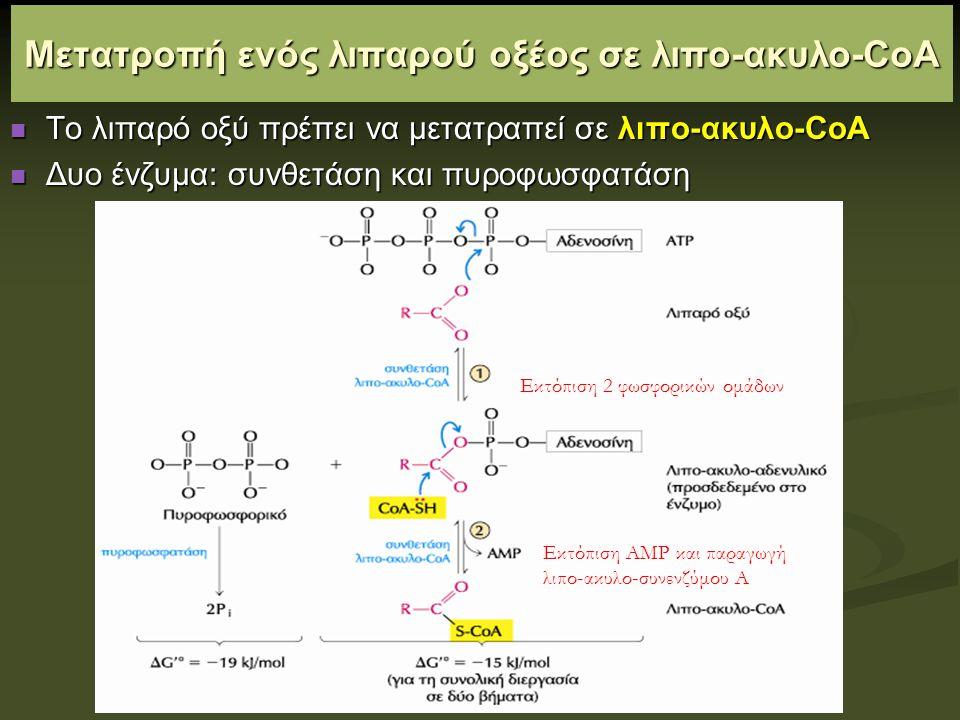 Μετατροπή ενός λιπαρού οξέος σε λιπο-ακυλο-CoA