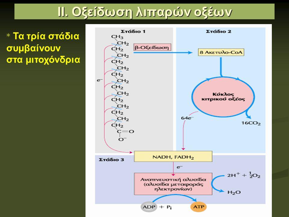 ΙΙ. Οξείδωση λιπαρών οξέων