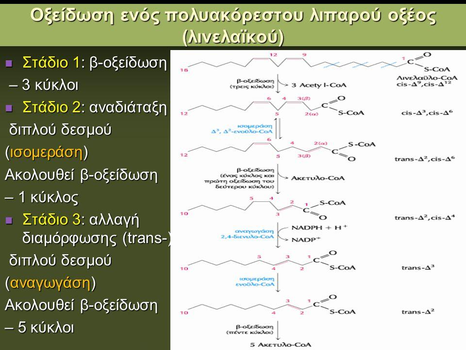 Οξείδωση ενός πολυακόρεστου λιπαρού οξέος (λινελαϊκού)
