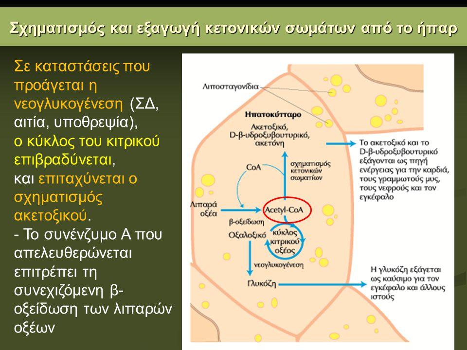 Σχηματισμός και εξαγωγή κετονικών σωμάτων από το ήπαρ