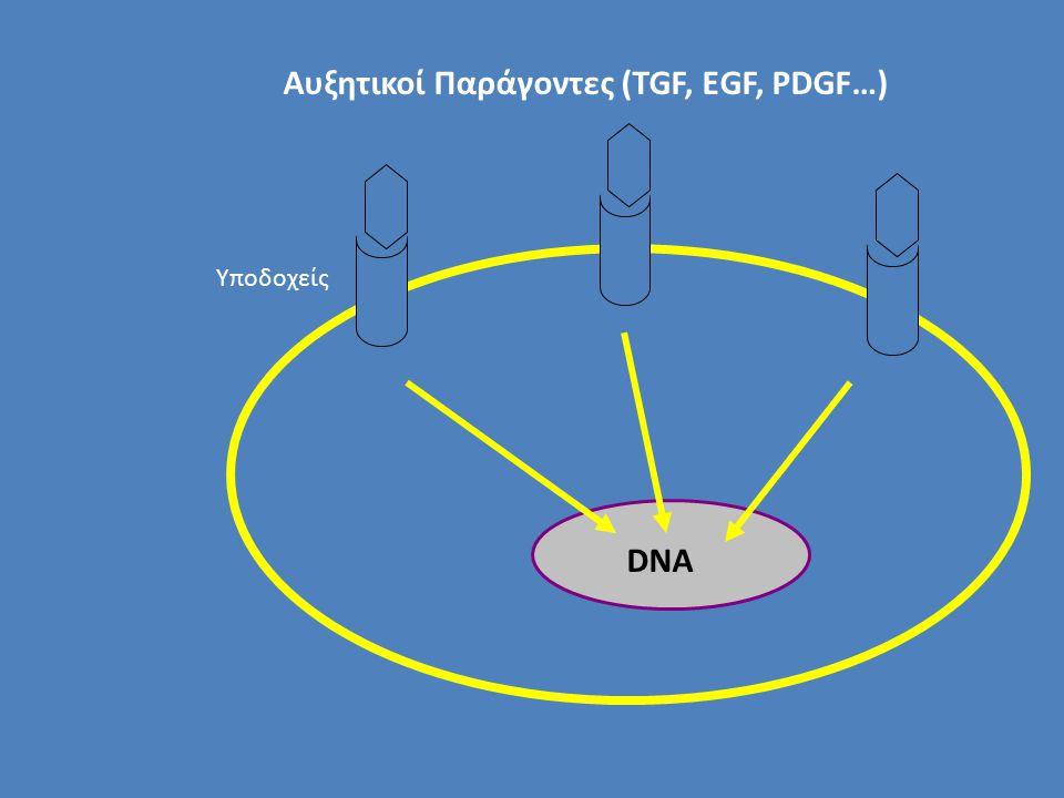 Αυξητικοί Παράγοντες (TGF, EGF, PDGF…)