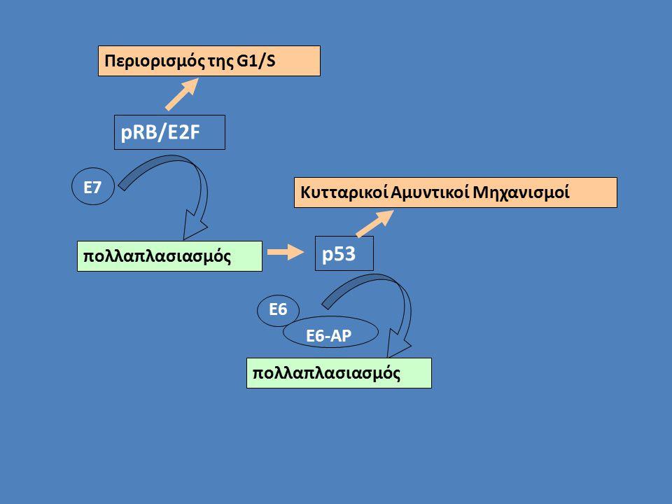 pRB/E2F p53 Περιορισμός της G1/S Ε7 Κυτταρικοί Αμυντικοί Μηχανισμοί