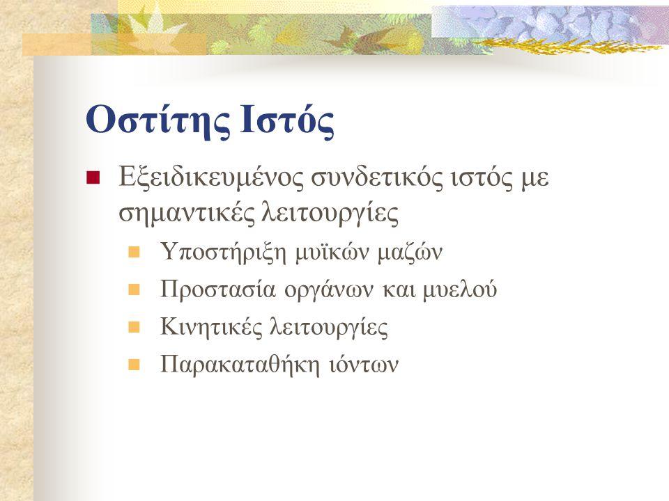 Οστίτης Ιστός Εξειδικευμένος συνδετικός ιστός με σημαντικές λειτουργίες. Υποστήριξη μυϊκών μαζών. Προστασία οργάνων και μυελού.