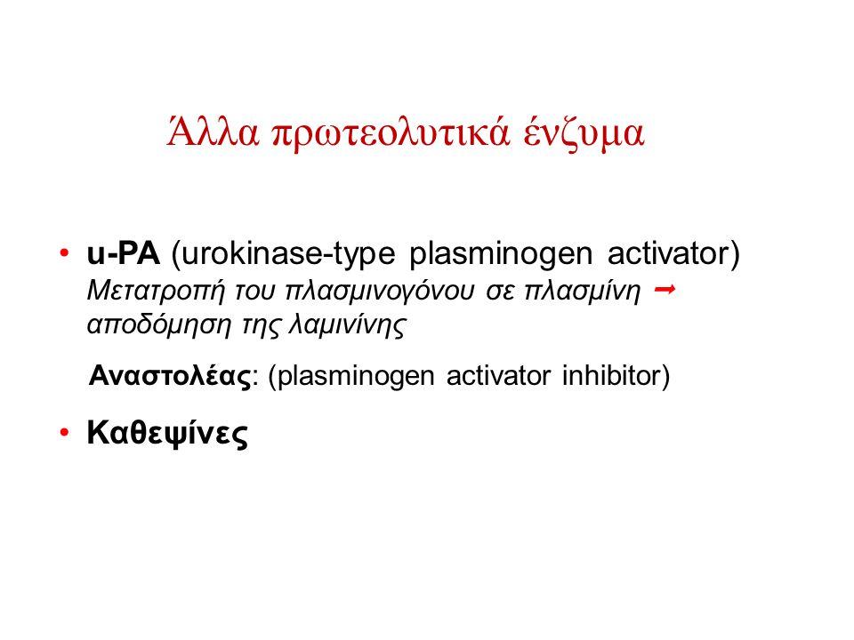 Άλλα πρωτεολυτικά ένζυμα