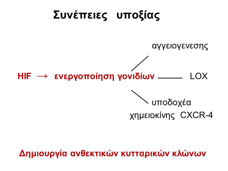 Συνέπειες υποξίας αγγειογενεσης HIF → ενεργοποίηση γονιδίων LOX