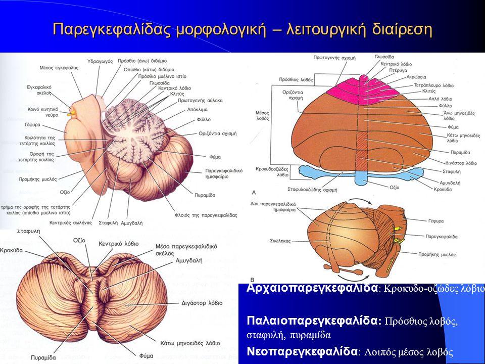 Παρεγκεφαλίδας μορφολογική – λειτουργική διαίρεση