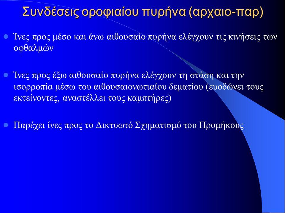 Συνδέσεις οροφιαίου πυρήνα (αρχαιο-παρ)