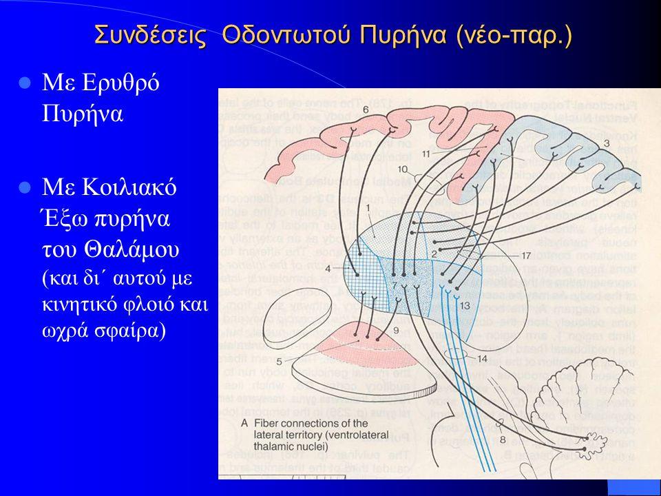 Συνδέσεις Οδοντωτού Πυρήνα (νέο-παρ.)