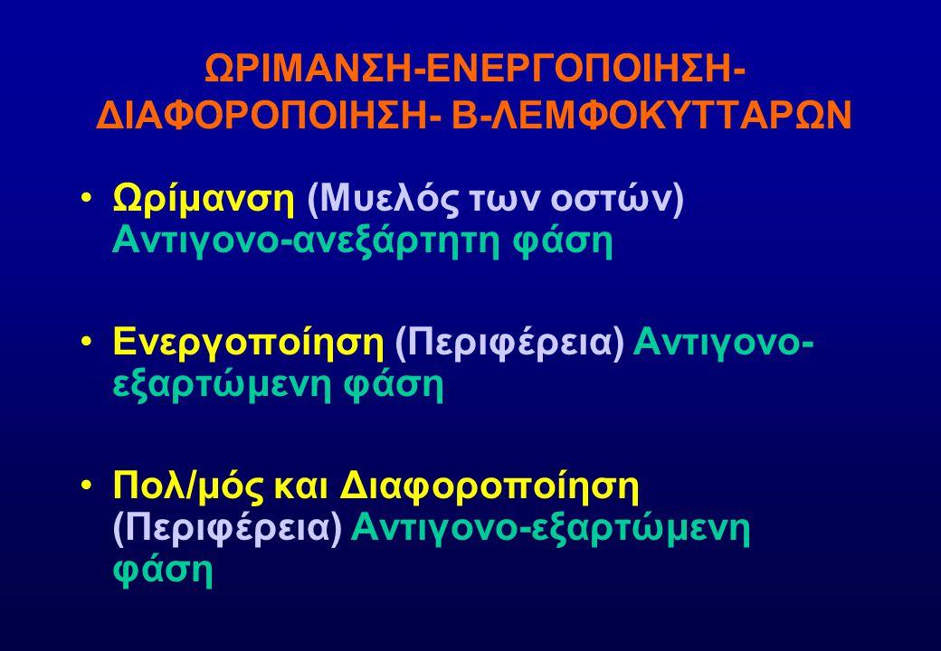 ΩΡΙΜΑΝΣΗ-ΕΝΕΡΓΟΠΟΙΗΣΗ-ΔΙΑΦΟΡΟΠΟΙΗΣΗ- Β-ΛΕΜΦΟΚΥΤΤΑΡΩΝ
