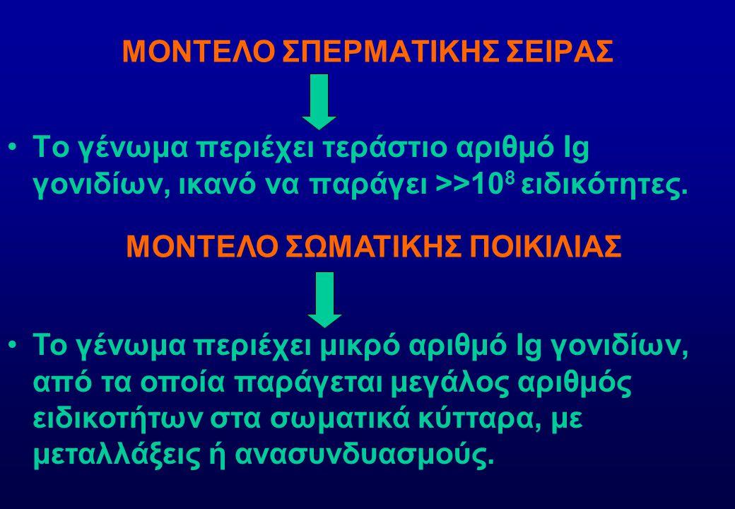 ΜΟΝΤΕΛΟ ΣΠΕΡΜΑΤΙΚΗΣ ΣΕΙΡΑΣ