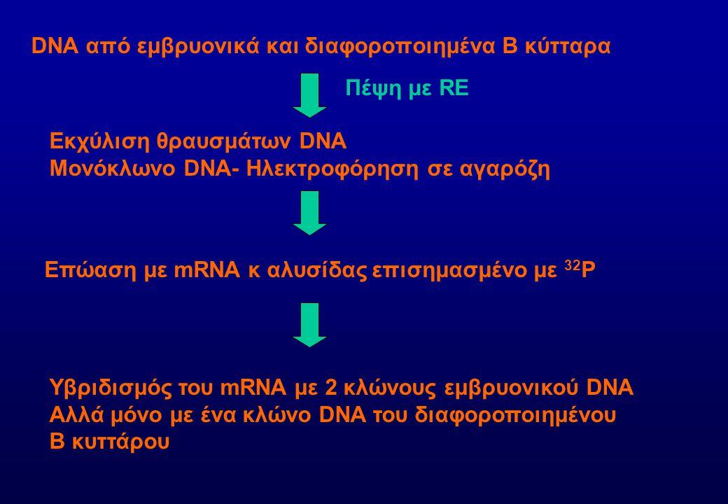 DNA από εμβρυονικά και διαφοροποιημένα Β κύτταρα