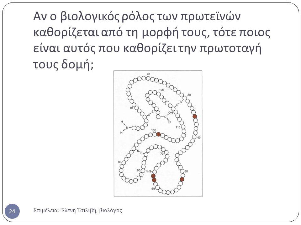 Αν ο βιολογικός ρόλος των πρωτεϊνών καθορίζεται από τη μορφή τους, τότε ποιος είναι αυτός που καθορίζει την πρωτοταγή τους δομή;
