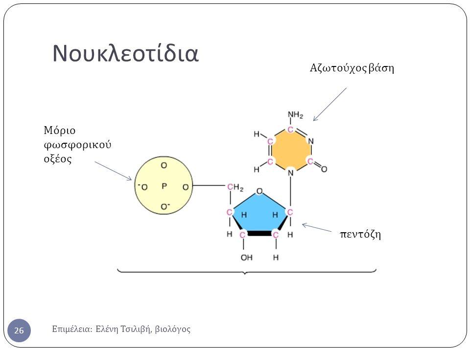 Νουκλεοτίδια Αζωτούχος βάση Μόριο φωσφορικού οξέος πεντόζη