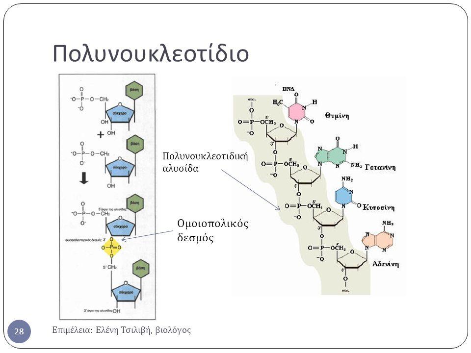 Πολυνουκλεοτίδιο Ομοιοπολικός δεσμός Πολυνουκλεοτιδική αλυσίδα