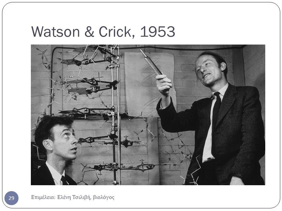 Watson & Crick, 1953 Επιμέλεια: Ελένη Τσιλιβή, βιολόγος