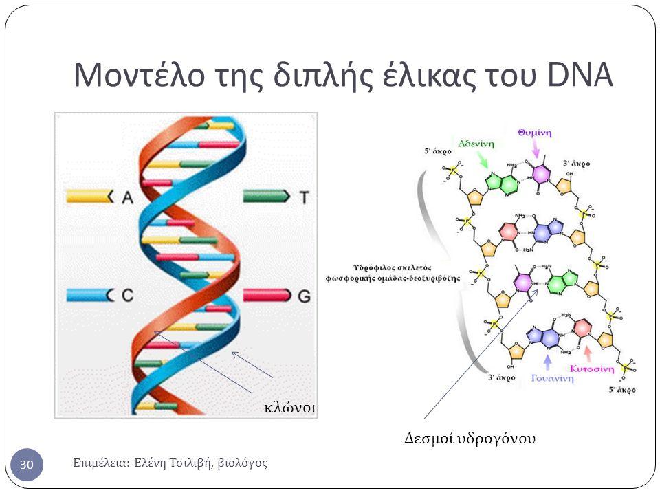 Μοντέλο της διπλής έλικας του DNA