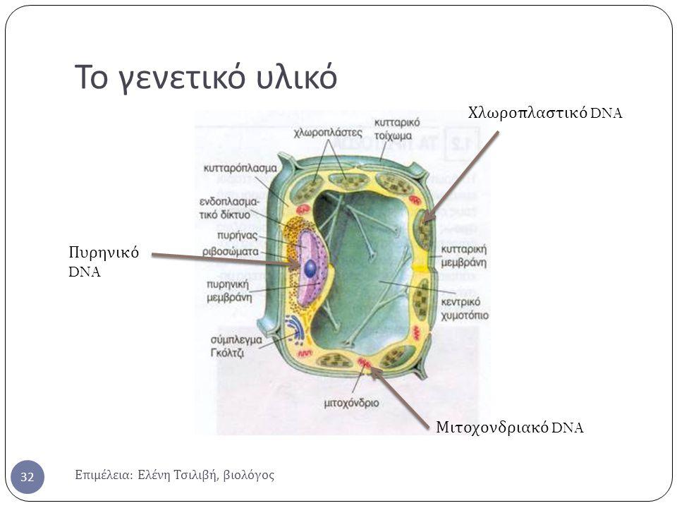 Το γενετικό υλικό Χλωροπλαστικό DNA Πυρηνικό DNA Μιτοχονδριακό DNA