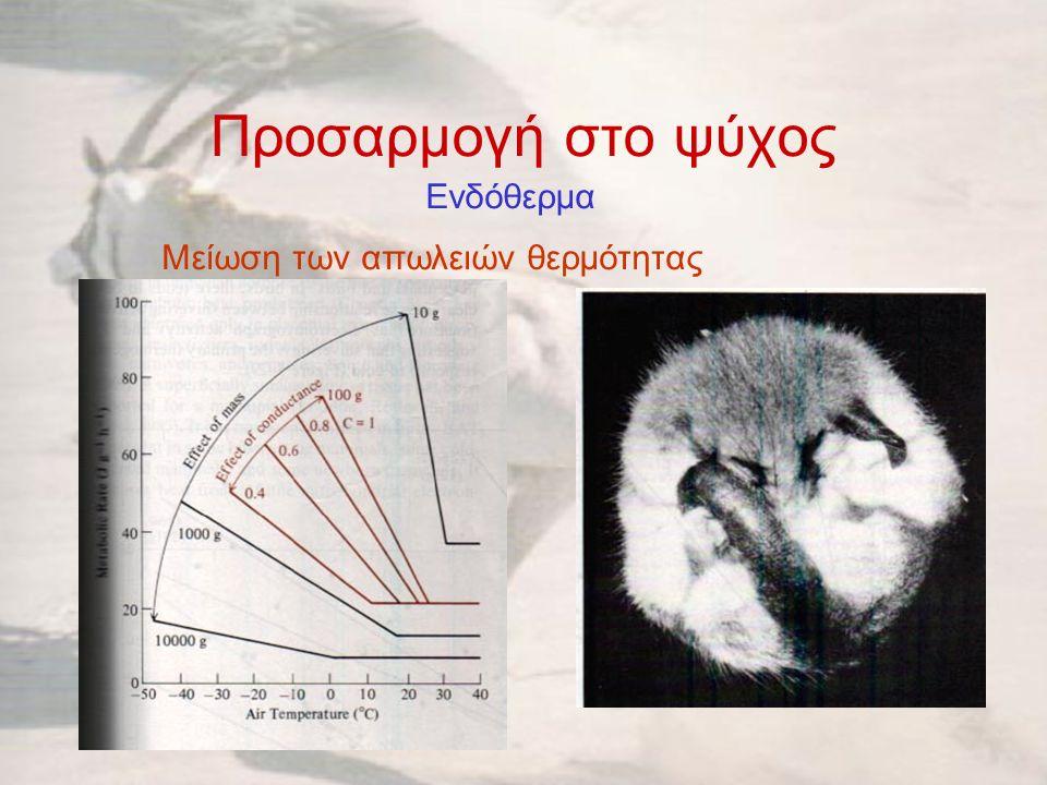 Προσαρμογή στο ψύχος Ενδόθερμα Μείωση των απωλειών θερμότητας