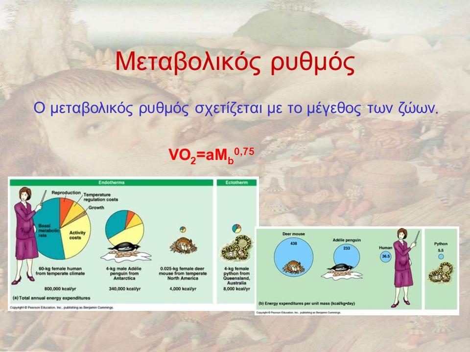 Μεταβολικός ρυθμός Ο μεταβολικός ρυθμός σχετίζεται με το μέγεθος των ζώων. VO2=aMb0,75