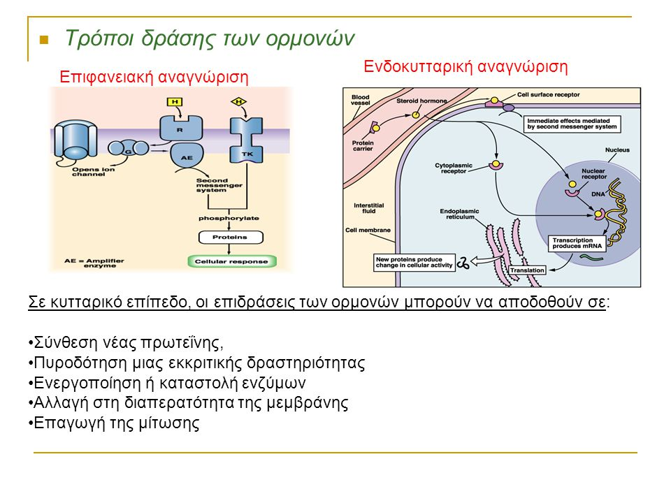 Τρόποι δράσης των ορμονών