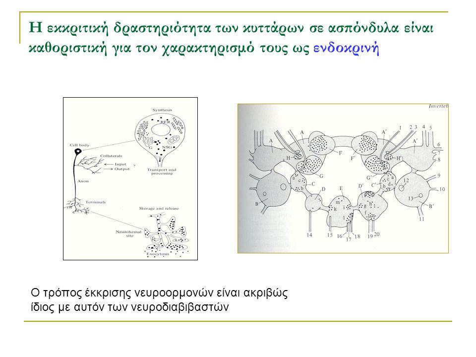 Η εκκριτική δραστηριότητα των κυττάρων σε ασπόνδυλα είναι καθοριστική για τον χαρακτηρισμό τους ως ενδοκρινή