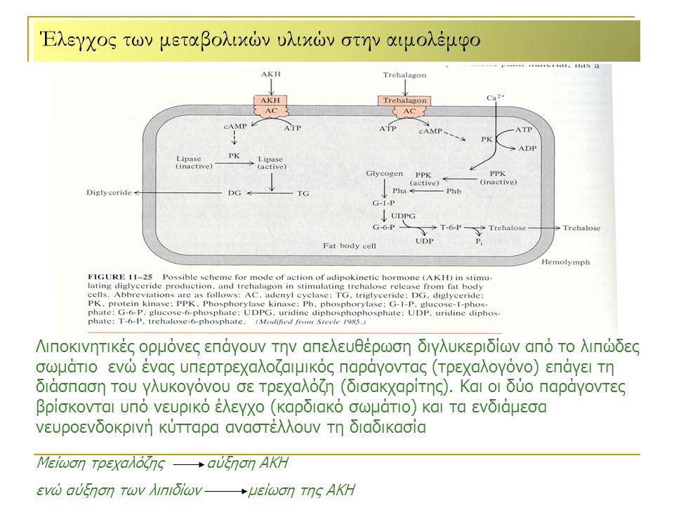 Έλεγχος των μεταβολικών υλικών στην αιμολέμφο