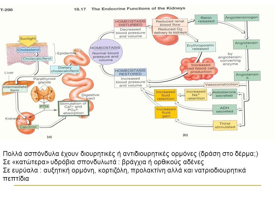 Πολλά ασπόνδυλα έχουν διουρητικές ή αντιδιουρητικές ορμόνες (δράση στο δέρμα;)