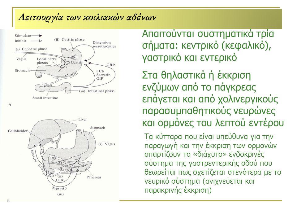 Λειτουργία των κοιλιακών αδένων
